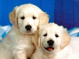 Nous sommes nés un vendredi 13 dans Billet d'humeur chiens2