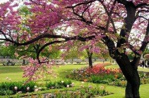 Mon jardin....mon refuge printemps-louvre-292923-300x198