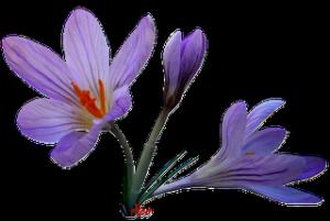 Penserie dans Evasion ptit-fleur2-300x201