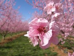 fleurette amour dans Vie quotidienne